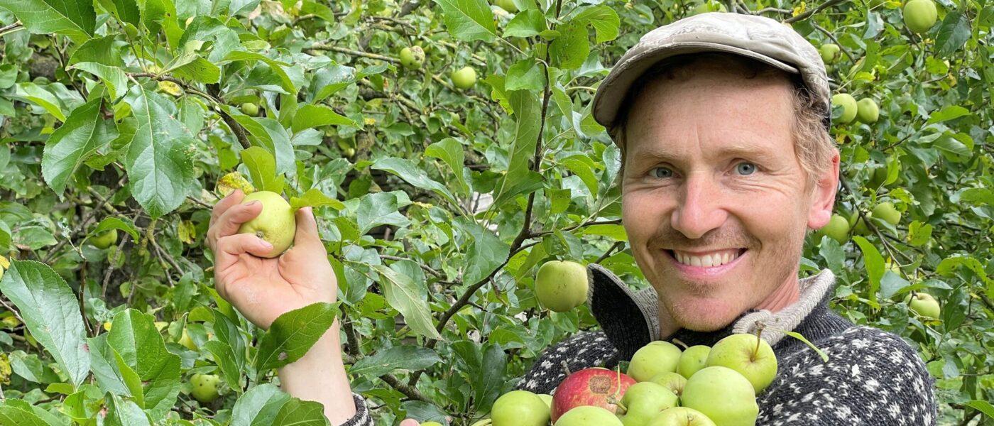 Æblefest på DR2 - helt ind til kernen